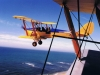 tigermoth_formation